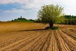 Paesaggio-Alessandrino4.jpg